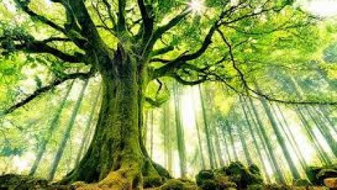 Ecology & Regeneration